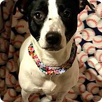 Adopt A Pet :: Eva Gabor - Cleveland, OH