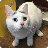 Adopt A Pet :: Kitty Boy - Greensburg, PA