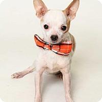 Adopt A Pet :: Alvin - Kenner, LA
