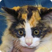 Adopt A Pet :: Aurora - Wildomar, CA