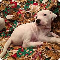 Adopt A Pet :: Snowball - Gilmer, TX