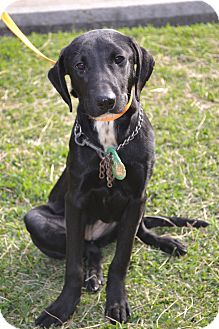 Labrador Retriever Mix Dog for adoption in Beaumont, Texas - Betty