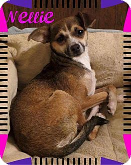 Chihuahua Mix Dog for adoption in Fort Wayne, Indiana - Nellie