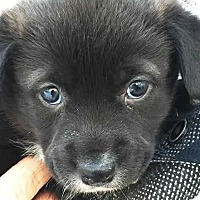 Adopt A Pet :: Remi - E. Greenwhich, RI