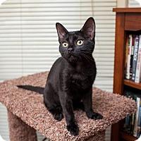 Adopt A Pet :: Moira - Statesville, NC