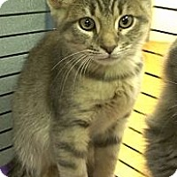 Adopt A Pet :: Dominic Monaghan - Richboro, PA
