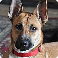 Adopt A Pet :: Tonka - Rigaud, QC
