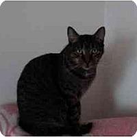 Adopt A Pet :: Ella - Montreal, QC