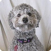 Adopt A Pet :: Gabby - Golden Valley, AZ