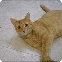 Adopt A Pet :: Leon - Metairie, LA