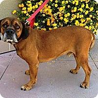 Adopt A Pet :: Skater - Santa Monica, CA