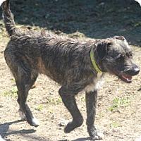 Adopt A Pet :: Fonzie - adoption pending - Norwalk, CT