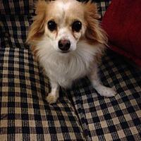 Adopt A Pet :: Buddy B - Phoenix, AZ