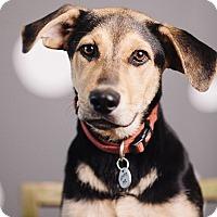 Adopt A Pet :: Gunner - Portland, OR