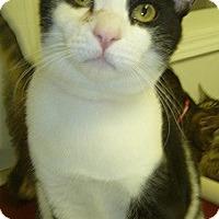 Adopt A Pet :: Phoebe Ann - Hamburg, NY