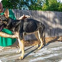 Adopt A Pet :: Karma - Riverview, FL
