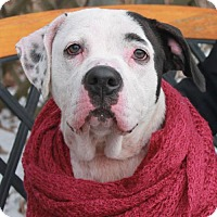 Adopt A Pet :: Mallory - Garfield Heights, OH