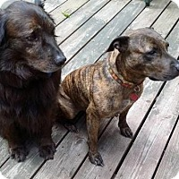 Adopt A Pet :: Beauty and Beast Bonded Pair - Enfield, CT