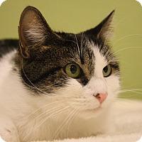 Adopt A Pet :: Emma - Aiken, SC