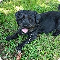 Adopt A Pet :: Bernie - Dallas, TX