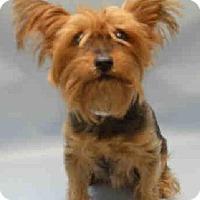 Adopt A Pet :: Misty - N. Babylon, NY