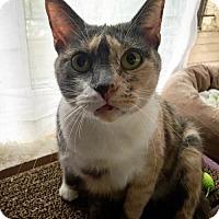Adopt A Pet :: Leigh - Herndon, VA