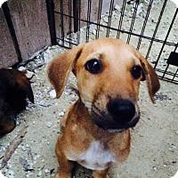 Brown Dog Rescue Hopkinton