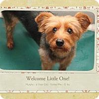 Adopt A Pet :: Murphy 3157 - Toronto, ON
