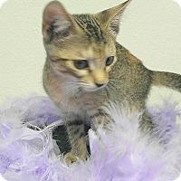 Adopt A Pet :: Dianna - Hallandale, FL