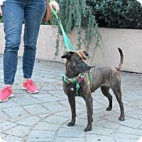 Adopt A Pet :: Karen Wheeler - Jersey City, NJ