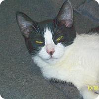 Adopt A Pet :: Marble - Mexia, TX