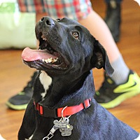 Adopt A Pet :: Penelope - Hanover, ON