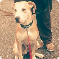 Adopt A Pet :: Bruno - Northumberland, ON