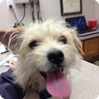 Adopt A Pet :: Gunnie - Omaha, NE