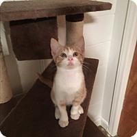 Adopt A Pet :: Chili - Butner, NC