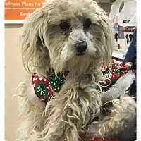 Adopt A Pet :: Nixie - Los Alamitos, CA