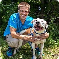 Adopt A Pet :: Patrick - Elizabeth City, NC