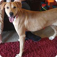 Adopt A Pet :: Astrid - Dayton, OH