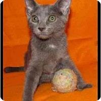 Adopt A Pet :: Elena - Orlando, FL