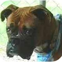 Adopt A Pet :: Ava - Sunderland, MA