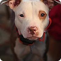 Adopt A Pet :: Emma - Mount Laurel, NJ