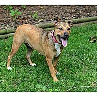 Adopt A Pet :: Stella - Lancaster, PA