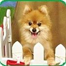 Adopt A Pet :: GG