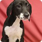 Adopt A Pet :: Vivian