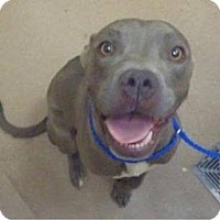 Adopt A Pet :: Petey - Las Vegas, NV