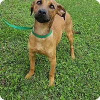 Adopt A Pet :: Lando - Lake Odessa, MI