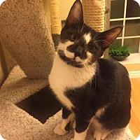 Adopt A Pet :: Finn - Glendale, AZ