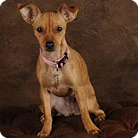 Adopt A Pet :: Madison - Henderson, NV