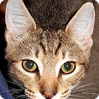 Adopt A Pet :: Toni - Chattanooga, TN
