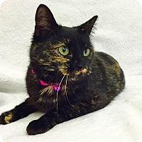 Adopt A Pet :: Janine - Mission Viejo, CA